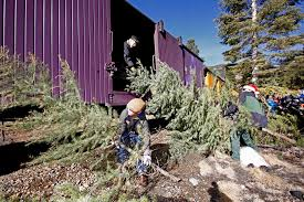 11 And Matt Janowiak Hand Christmas Trees Up To George Nelson In A Boxcar On The Durango Silverton Narrow Gauge Railroad Tree Train