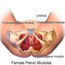 Pelvic Floor Tension Myalgia by Chronic Female Pelvic Pain Things You Didn U0027t Know