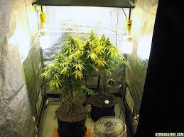 small 250 watt grow help a newbie