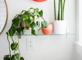 Good Plants For Bathroom by The Best Small House Plants