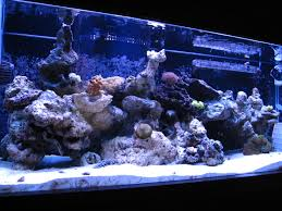 Our New AquascapeSandbarAquatics 75 Gallon Tank Aquascape Ideas Please Reef Central Online Community Minimalist Aquascaping Page 3 2reef Saltwater And How To A Aquarium Youtube Tank Rockscape To Drill Cement Your Live Rock Gmacreef Columns In A Saltwater Callorecom Pieter Van Suijlekoms Revisited Is There Science Live Rock Sanctuary The Why I Involuntarily Redid My Mr 7