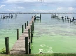 blue green algae spotted at bathtub reef beach in martin county