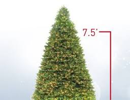 12 Ft Christmas Tree Canada by Shop Christmas Trees At Lowes Com