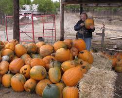 Atlantic Giant Pumpkin Taste by Seed Catalog Seed Treasures