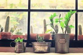 kakteen stachelige deko für ihr wohnzimmer agentur