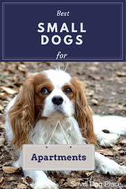 Small Non Shedding Dogs by Best Small Dogs For Apartments