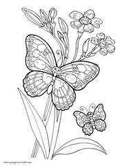 The Butterfly Picture Colouring Page Of Some Lovely Butterflies And Flowers Coloring Book