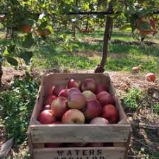 Apple And Pumpkin Picking Maryland by Waters Orchard 22 Photos U0026 12 Reviews Farmers Market 22529