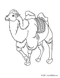 Caspar The Indian King Bactrian Camel Coloring Page