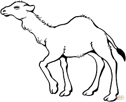 Young Dromedary Camel coloring page