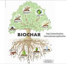 Define Carbon Sink Geography by Cannabis Cultivation Carbon Budgets And The Promise Of Biochar