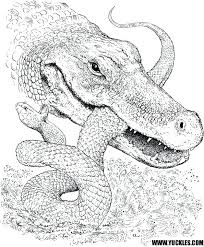 Alligator Coloring Pages For Adults Page By Baby Free Printable