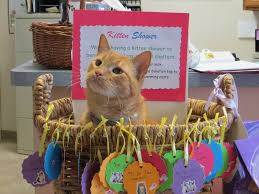 arlington cat clinic arlington cat clinic hosts kitten shower