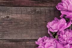 Pink Peony Flower On Dark Rustic Wooden Background With Copy Spa Royalty Free Stock Photo