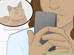 coping cat 4 ways to cope with the of your cat wikihow