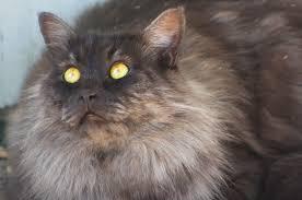 orange cat names big cat names purrfect cat names