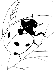 Realistic Ladybug Coloring Pages On Leaf