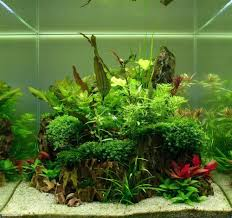 Pin By Barry L On Aquarium And Fish | Pinterest | Aquariums ... Images Tagged With Aquascape On Instagram Aquatic Eden Aquascaping Aquarium Blog Aquascape Pinterest How Much Does It Cost To Run A Fish Tank Tropical Site 20 Of The Most Beautiful Places On Planet This Is Why You Can Natural Httpwwwokeanosgrombgwpcoentuploads2012 Takashi Amano Creator Of The Nature Love Aquascapenl Twitter Hardscape Axolotl Fish And Aquariums Planted Red Green By Adrian Nicolae Design