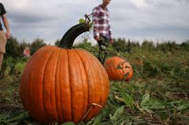 Pumpkin Patch Fort Wayne 2015 by 9 Pumpkin Patches To Visit Near Columbus This Fall Interactive Map