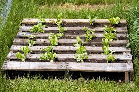 Custom Pallet Garden Ideas — Jbeedesigns Outdoor How To Setting