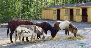 Livestock Loafing Shed Plans by Barns For Miniature Horses Small Horse Barns Horizon Structures