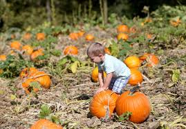 Northeast Iowa Pumpkin Patches by Dittmar Farm Among Tri State Pumpkin Patches To Pick From