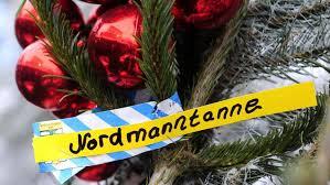 Christmas Tree Saplings Ireland by Risking Lives For Christmas The Human Cost Of Georgia U0027s Fir Tree