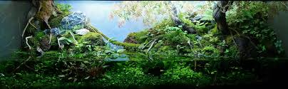 Andreas Ruppert And Aquascaping - Aqua Rebell An Inrmediate Guide To Aquascaping Aquaec Tropical Fish Most Beautiful Aquascapes Undwater Landscapes Youtube 30 Most Amazing Aquascapes And Planted Fish Tank Ever 1 The Beautiful Luxury Aquaria Creating With Earth Water Photo Planted Axolotl Aquascape Tank Caudataorg 20 Of Places On Planet This Is Why You Can Forum Favourites By Very Nice Triangular Appartment Nano Cube Aquascape Nature Aquarium Aquascaping Enrico A Collection Of Kristelvdakker Pearltrees