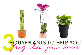 Plants In Bathroom Feng Shui by 3 Houseplants To Help You Feng Shui Your Home For Spring