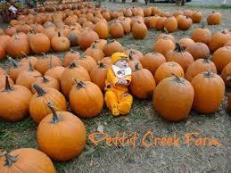 Bengtson Pumpkin Farm Lockport by 11 Best Farm Fun Images On Pinterest Southern Belle Corn Maze