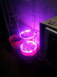 led grow lights fertilight halo rings tomato plant
