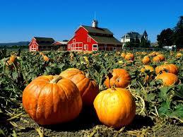 Pumpkin Patch Farms Nashville Tn by Fall Favorites