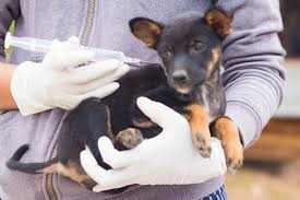 Using Pumpkin For Diarrhea In Dogs by Charcoal In Dogs Conditions Treated Procedure Efficacy