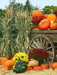 Pumpkin Farms Near South Milwaukee by Mums Pumpkins U003d Beautiful Autumn Colors Outdoor Beauty