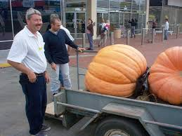 Heaviest Pumpkin Ever by Atlantic Seeds By The Pumpkin Lady Competition