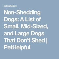 List Of Non Shedding Hypoallergenic Dogs by Best 25 Non Shedding Dogs Ideas On Pinterest Non Shedding Dog