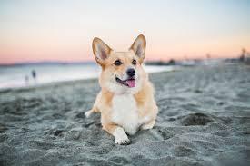 Small Non Shedding Dogs For Seniors the best dog breeds for seniors