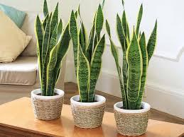plante chambre 5 plantes d intérieur pour décorer la chambre à coucher et nous