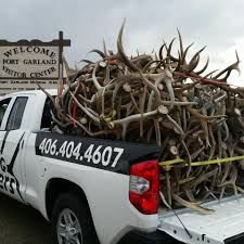 Antlers Montana - 127 Photos - Organization - Photos Opening Day Of Wyomings Shed Hunting Season Outdoor Life Holiday Lighted Car Antlers Pep Boys Youtube Wip Beta Released Beamng Antlers The Cairngorm Reindeer Herd Dump Truck Full Image Photo Bigstock Atoka Ok Official Website Meg With Flowers By Myrtle Bracken Vw Kombi Worlds Best And Truck Flickr Hive Mind Amazoncom Bluegrass Decals Show Me Your Rack Deer May 2009 Bari Patch My Antler Base Shift Knob Elk Pinterest Cars Buck You Vinyl Window Decal Nature Woods Redneck