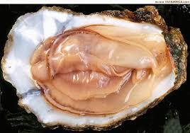 cuisine erotique mythe l huître est aphrodisiaque moules et huîtres 2