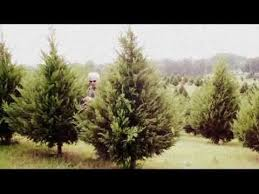 Christmas Tree Farm Near Lincoln Nh by 12 Best Places To Visit Beavers Christmas Tree Farm Images On