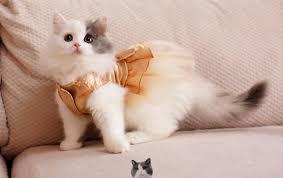 cat wedding dress bling bling cat wedding dress cat tutu dress pet dress