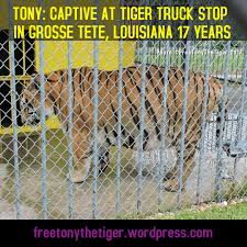 Free Tony The Tiger On Twitter: