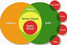 Sofa Sepsis Pdf 2016 by The Third International Consensus Definitions For Sepsis And