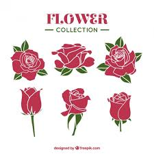 Collection Of Roses With Different Styles