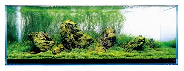 Miyabi Aqua Design   Nature Aquariums And Aquascapes Aquascaping Lab How To Mtain Trimming Clean And Change Aquascape Pinterest Red Rock Journal By James Findley The Green Machine Pennywort Brazilian Aquatic Plant Google Search Aquascaping Giuseppe Nisi Giuseppe_nisi_aquascaping Instagram Aquarium Sand Layouts Nature For Simons Blog Layout Ideas Tag Layout Aquascape Marcel Dykierek Aqua Rebell Shaping I Undaterworlds 85 Ian Holdich Tropica Plants