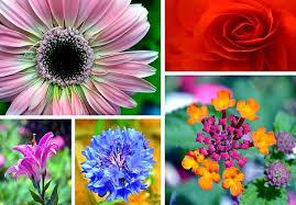 it with flowers deena