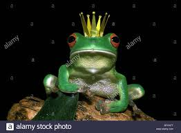 100 King Of The Frogs King Of Stock Photo 21793068 Alamy