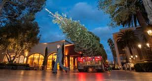 Christmas Arrives On Halloween With Fashion Islands 90 Foot Tree Orange County Register