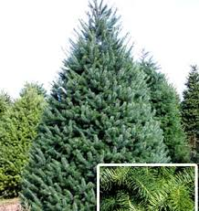 Plantable Christmas Trees Columbus Ohio by Timbuk Farms Christmas Trees Granville Ohio